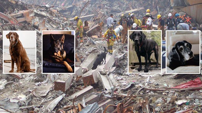 DOGS WHO HELPED ON 9/11 IN THE USA