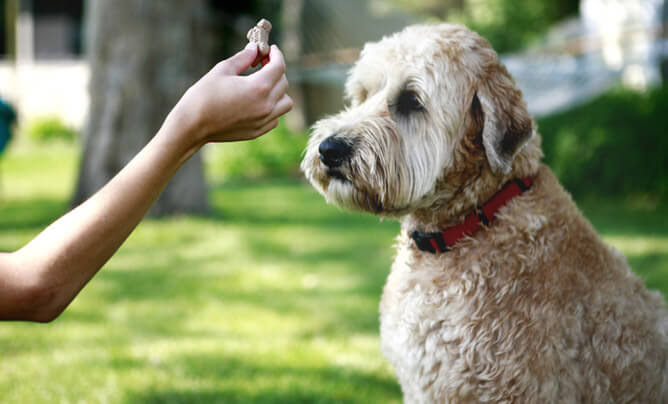 Basic Simple Dog Tricks To Teach, Dog Training & Teaching Techniques & Video
