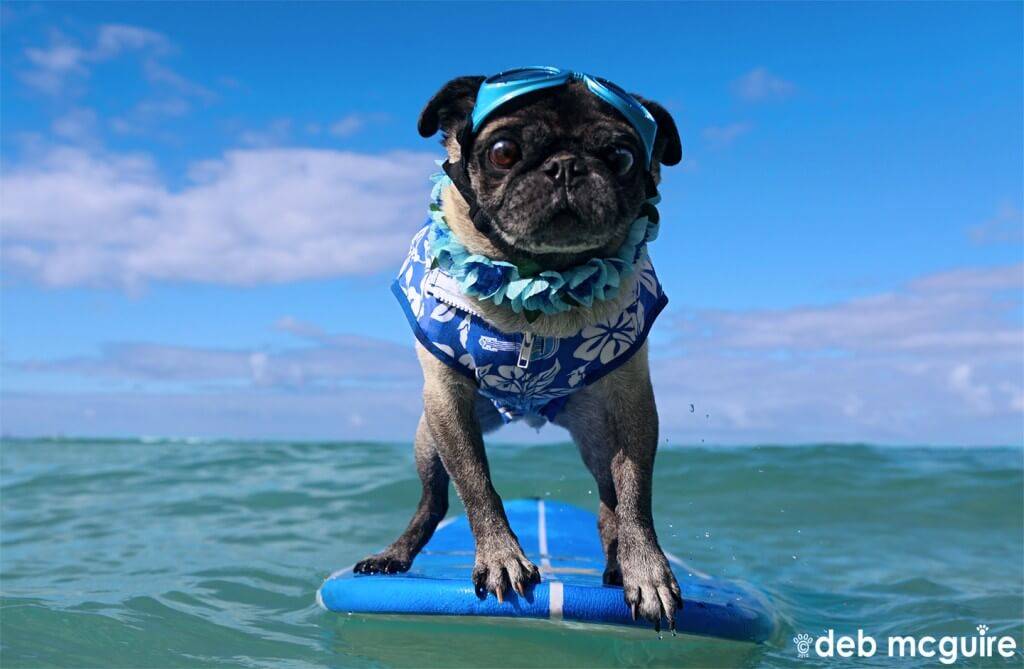 surfing dogs and puppies