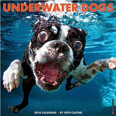 UNDERWATER DOG and PUPPY CALENDARS