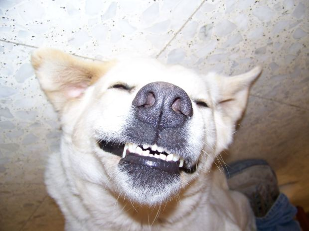 So, Do Dogs Smile?