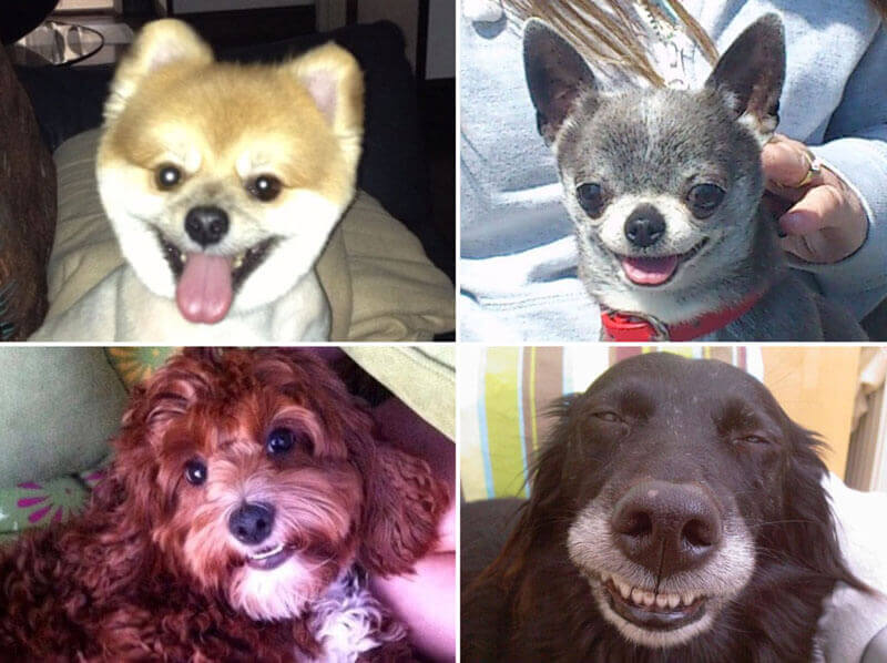smiling dogs, dogs smile