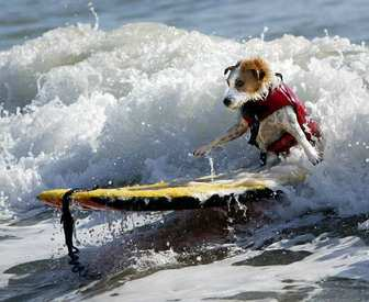 dog surf - photo (c) by SoCal Surf