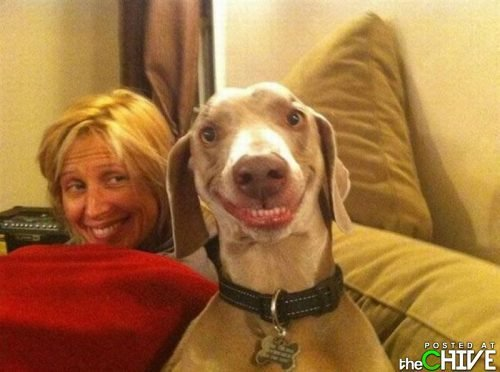 Dog Facial Expressions & Smiles