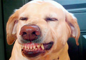 Dog smile, Do dogs smile? Dog smiles in commercials & vine