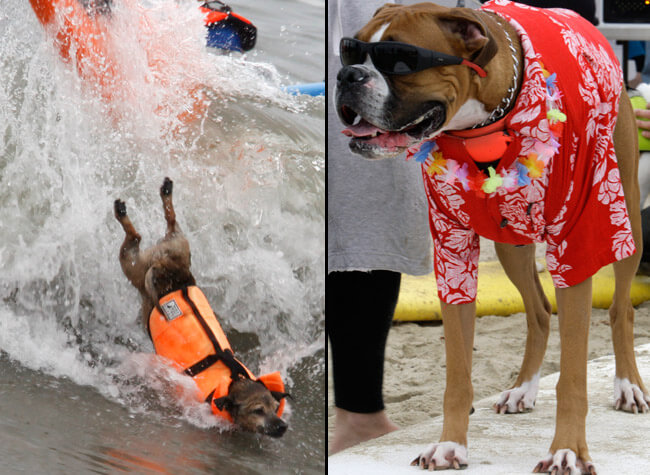 Teach dog surf