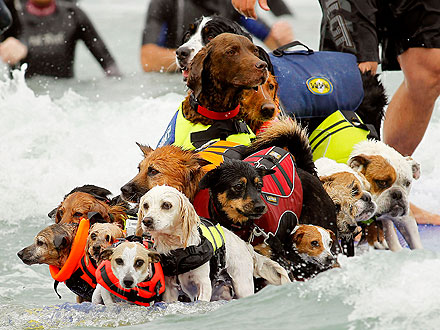 surfing dogs competition