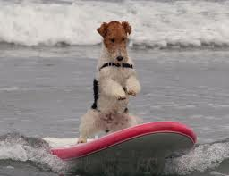 Surfing Dogs Photos