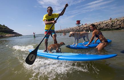 dog and human tandem surfing