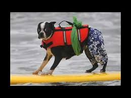 Free Surfing Dogs Photos