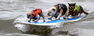 dog surf- photo (c) by SoCal Surf