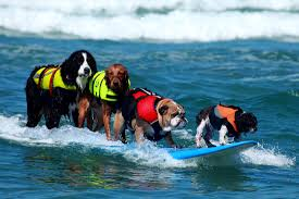 Surfing Dog Records