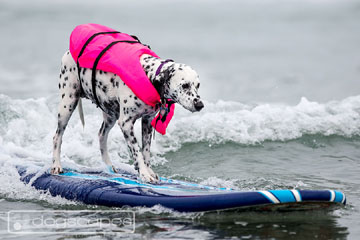 Surfing Dog Competition, Contest, Names