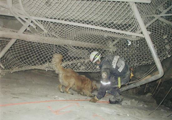 ANNA - this photo (c) by Dog Heroes of September 11th. Kennel Club Books