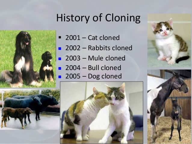 The History of Dog Cloning