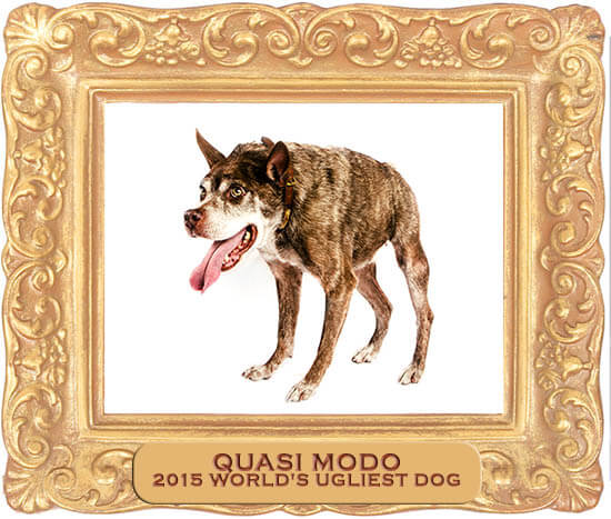 Quasimode Dogs Videos, Companion, German Shepherd