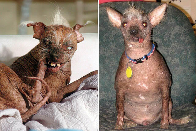 Ugliest Quasimodo Dog of 2015 Video, Photo