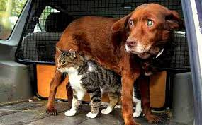 DEAFNESS in DOGS vs CATS