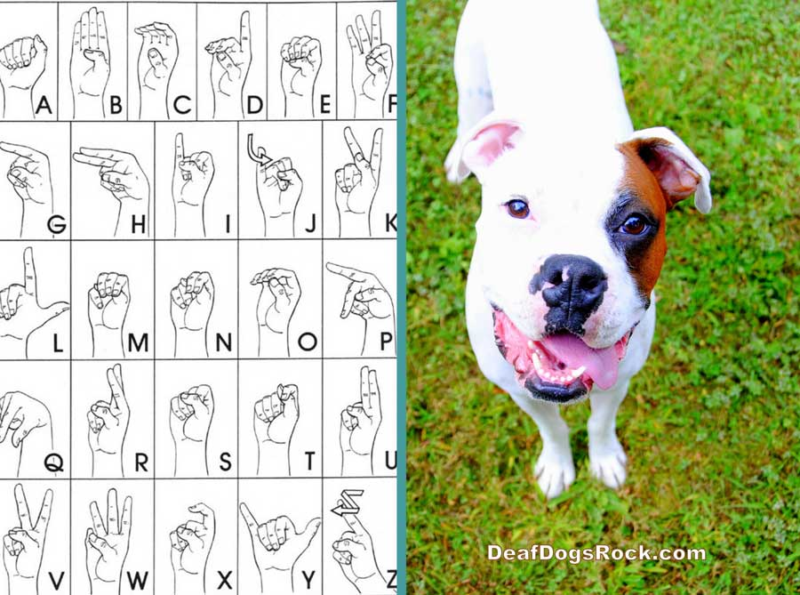 DEAF DOG and PUPPY TRAINING TIPS, TRICKS TECHNIQUES - HAND SYGNALS