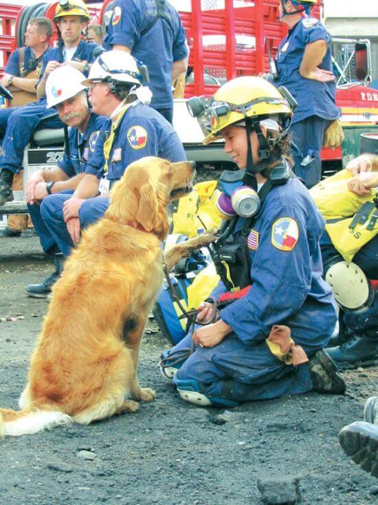 BRETAGNE - this photo (c) by Dog Heroes of September 11th. Kennel Club Books