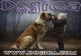 FREE DOGICA&reg BANNERS