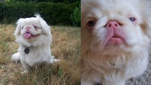 ALBINISM IN DOGS, ALBINO DOG and PUPPY