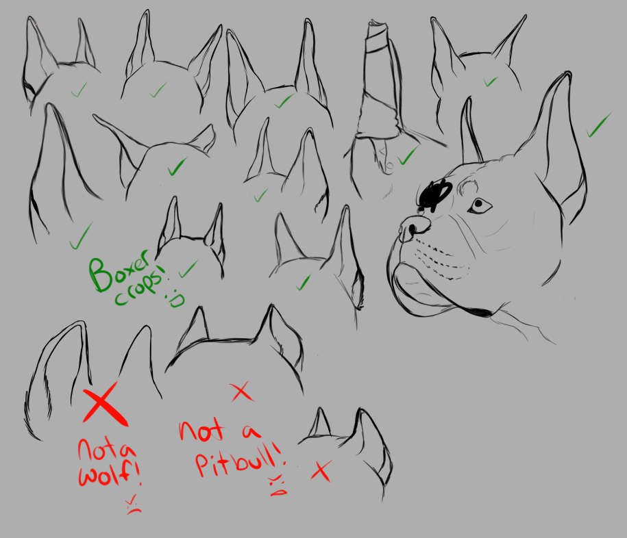 DOG EAR CROPPING