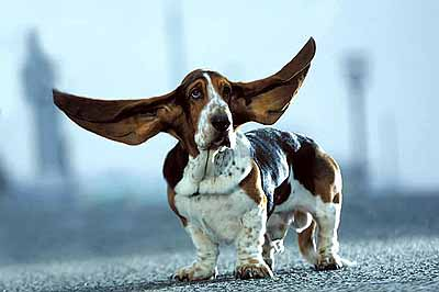 DOG HEAR EAR