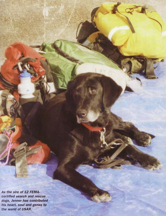 JENNER - this photo (c) by Dog Heroes of September 11th. Kennel Club Books