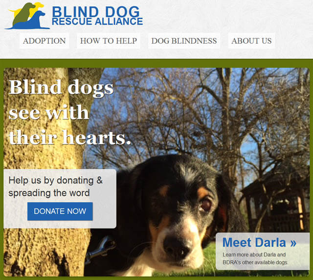 WWW.BLINDDOGRESCUE.ORG