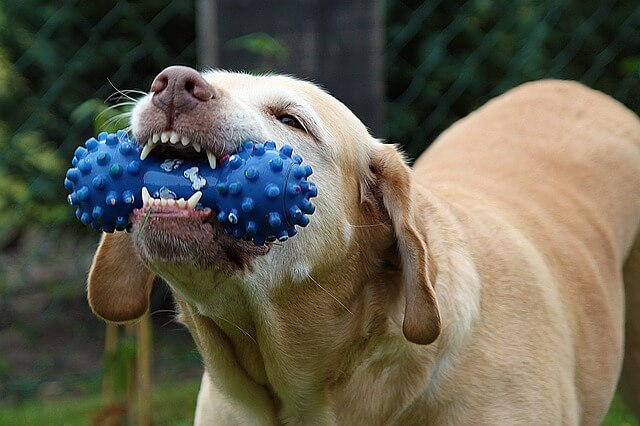 BEST DOG CHEWING TOYS