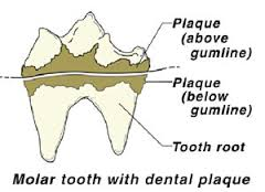 HOW TO CHECK DOG TEETH, DOG & PUPPY TEETH FALLING, LOSING, PROBLEMS, DIAGRAM, INFORGRAFIC