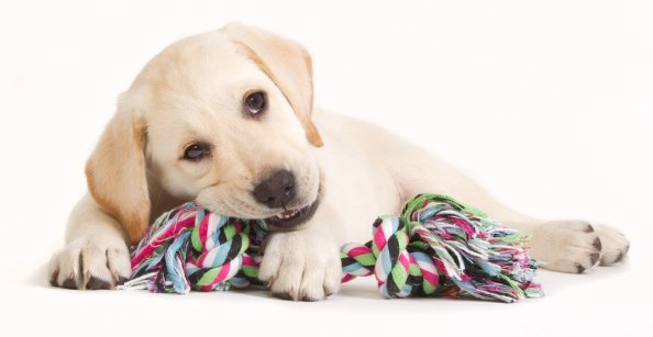 This photo (c) by Depositphotos.com / DagmarHijmans - BEST DOG CHEWING TOYS