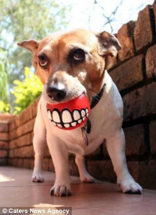 DOG TEETH CLEANING GUINNESS RECORD ATTEMPT