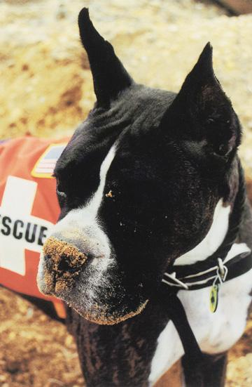 LOUIE - this photo (c) by Dog Heroes of September 11th. Kennel Club Books