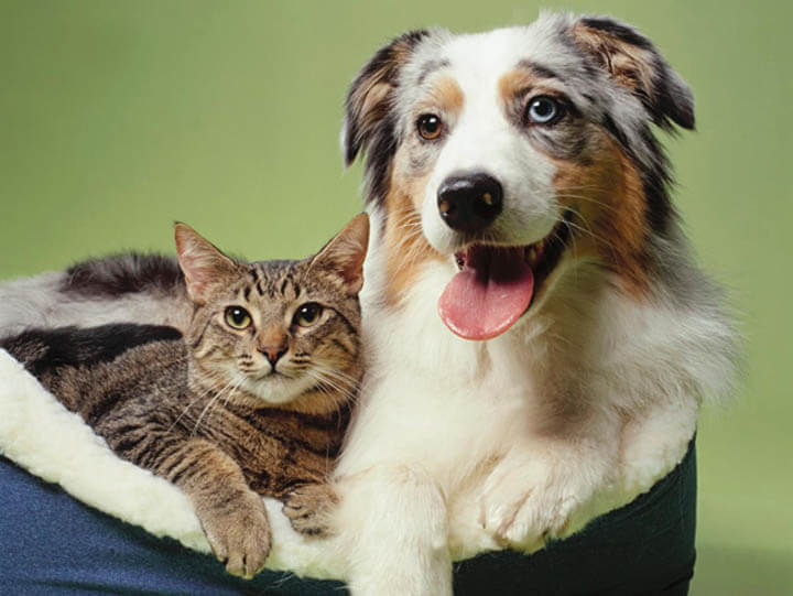 Dog Memory vs Cat Memory: Long-term, Short-term, General