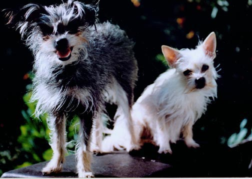 This photo is courtesy of Jang Goo Lee Byu - The First cloned Dog - Snuppy - History of Dog Cloning