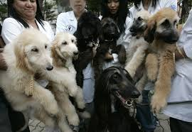 The History of Dog Cloning and First cloned Dogs - AT LEFT SIDE SNUPPY, AT RIGHT SIDE - DONOR, TAI