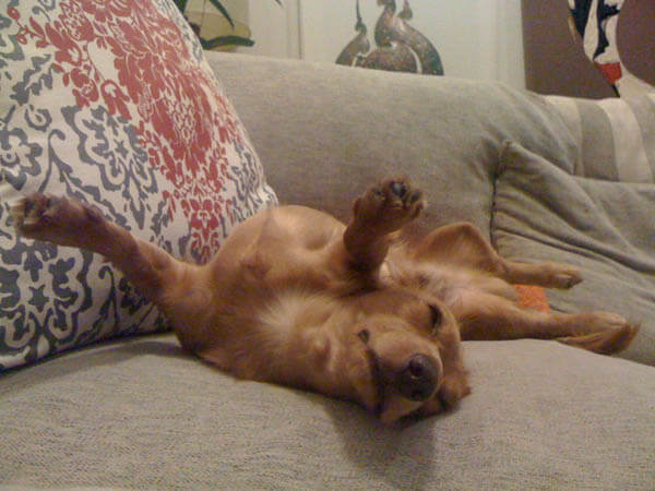 DOG SLEEP DREAM POSITION