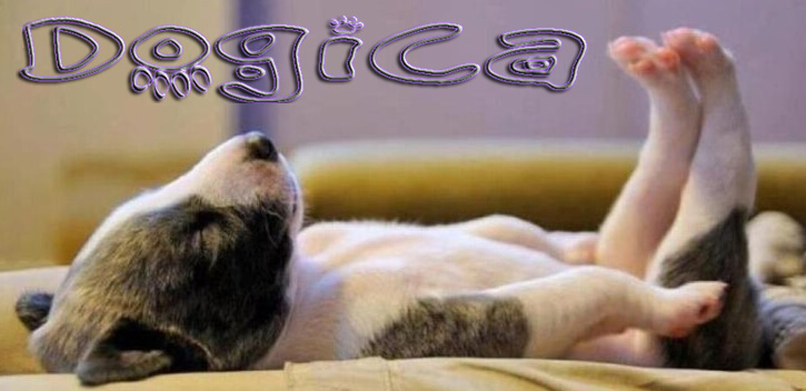 Dog Dreams, Do dogs dream? Dog Dreams Inn and Video, DOG SLEEP & DREAMS
