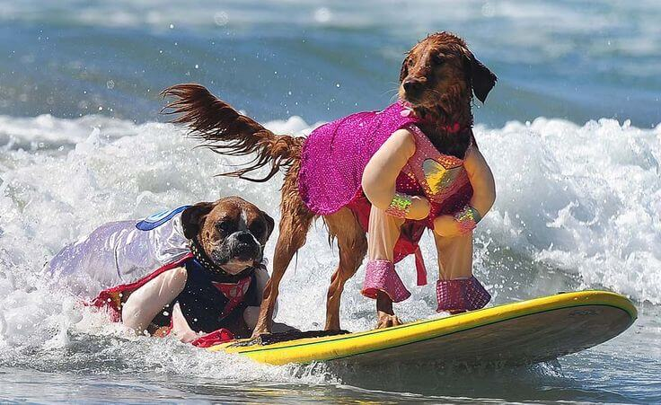 Surf Dog Costumes