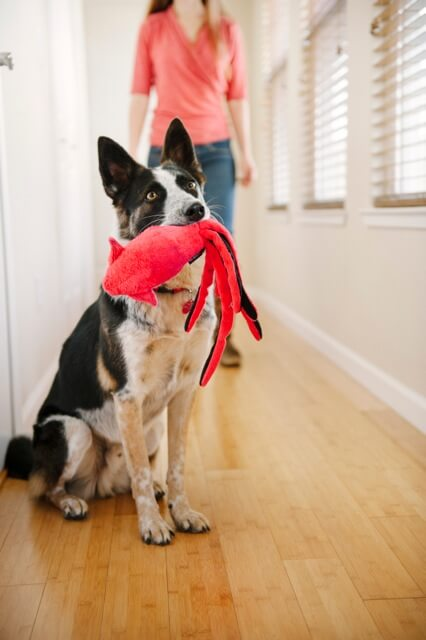best dog & puppy toys - photo (c) by Photo Lab Pet Photography