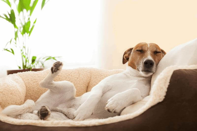 WHERE SHOULD DOG SLEEP?