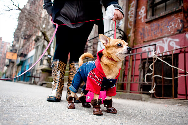 Fasion Dog Boots & Shoes