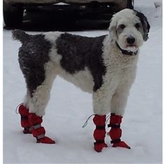 BAD DOG SHOES & BOOTS