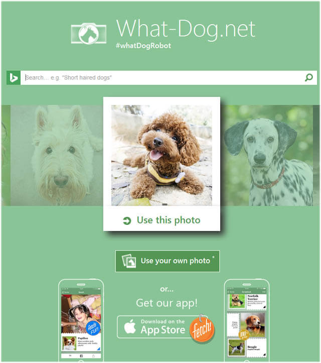 WWW.WHAT-DOG.NET
