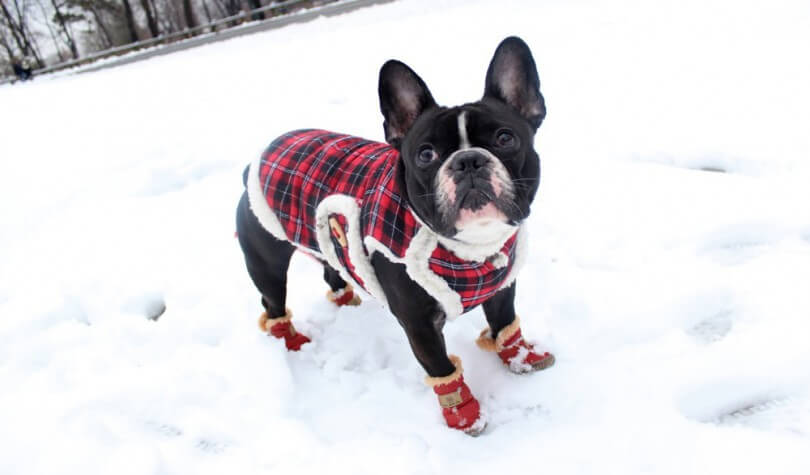 BUY BEST DOG BOOTS, SOCKS & SHOES ONLINE