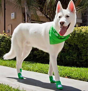 Fashion Dog Boots & Shoes