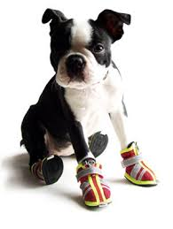Dog Shoes and Boots How To Choose Guide Information