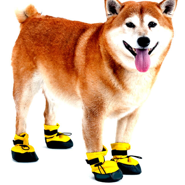 MUTTLUKS Dog Shoes and Boots